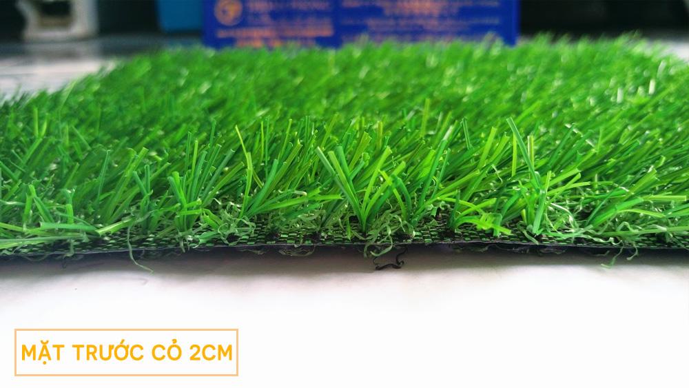Mặt trước thảm cỏ nhân tạo sân vườn 2cm